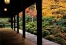 バスの日 11月 紅葉の京都 イメージ