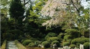 【京都府】春の特別公開!安楽寺庭園と生八ッ橋作り体験 イメージ