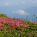 【滋賀県】日本百名山  伊吹山ハイキング イメージ