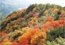 紅葉の小豆島 寒霞渓の旅 イメージ