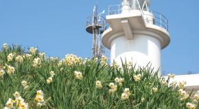 【笠岡諸島】冬季限定プラン!水仙の島『六島』と海苔づくし豪華ランチ堪能ツアー イメージ
