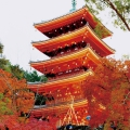 【スタートラベル共同企画】紅葉の名所を巡る京都紅葉ツアー イメージ