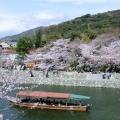 【スタートラベル共同企画】春らんまん。桜の名所巡りツアー イメージ